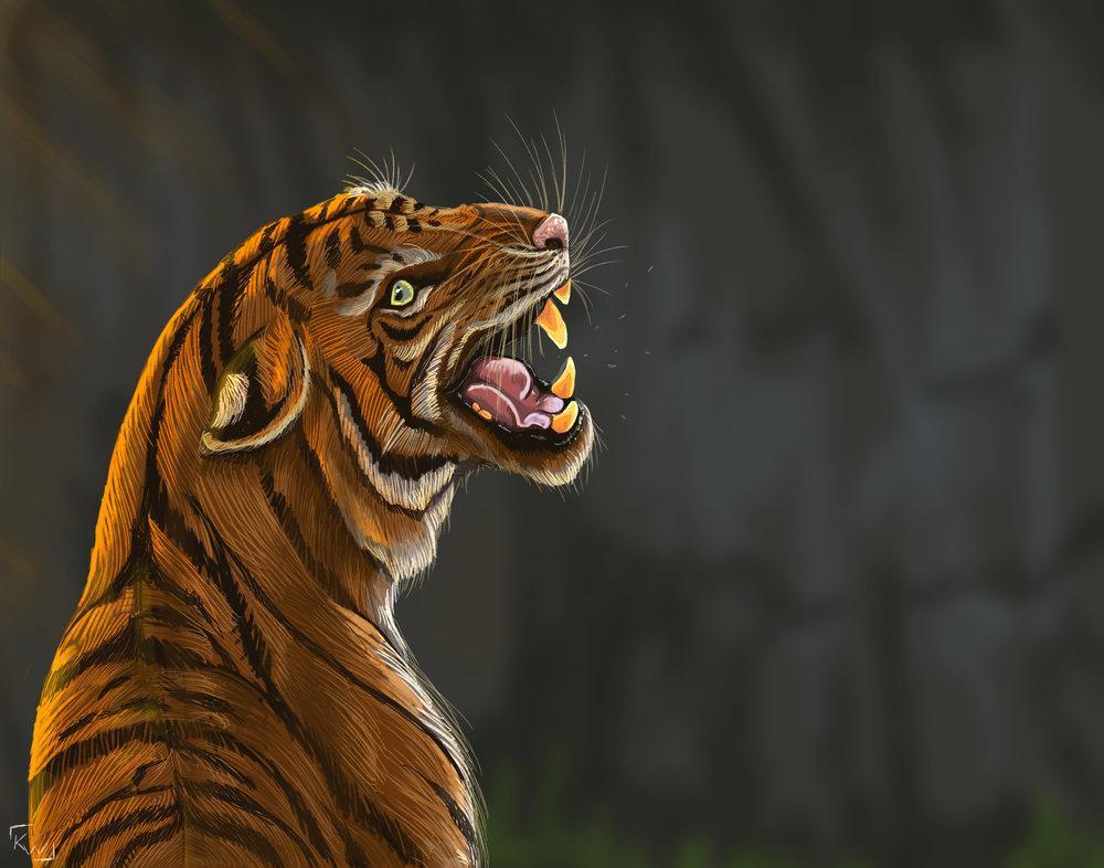 Tigre -kwuillot