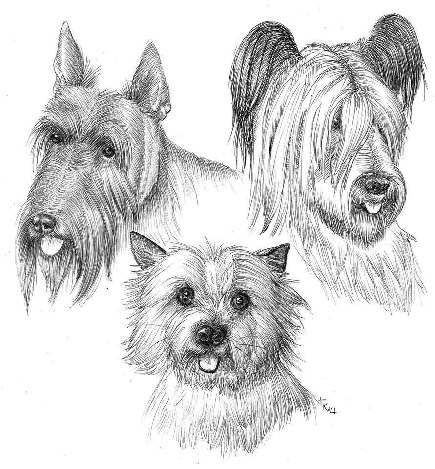 3 chiens déssinés -kwuillot